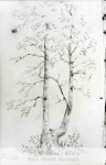 mss16_1_10_sketch_of_trees__george_henry_durrie1-93-800-600-80-wm-center_bottom-50-watermark2png