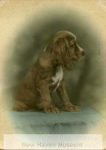 dog__joseph_baltrush_collection-1945-800-600-80-wm-center_bottom-50-watermarkphotos2png